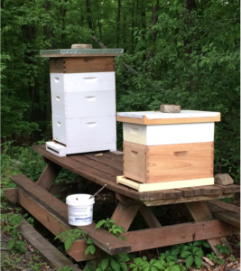 Two of my hives. Right one is one of the new swarm hives.